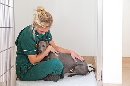 nurse with whippet